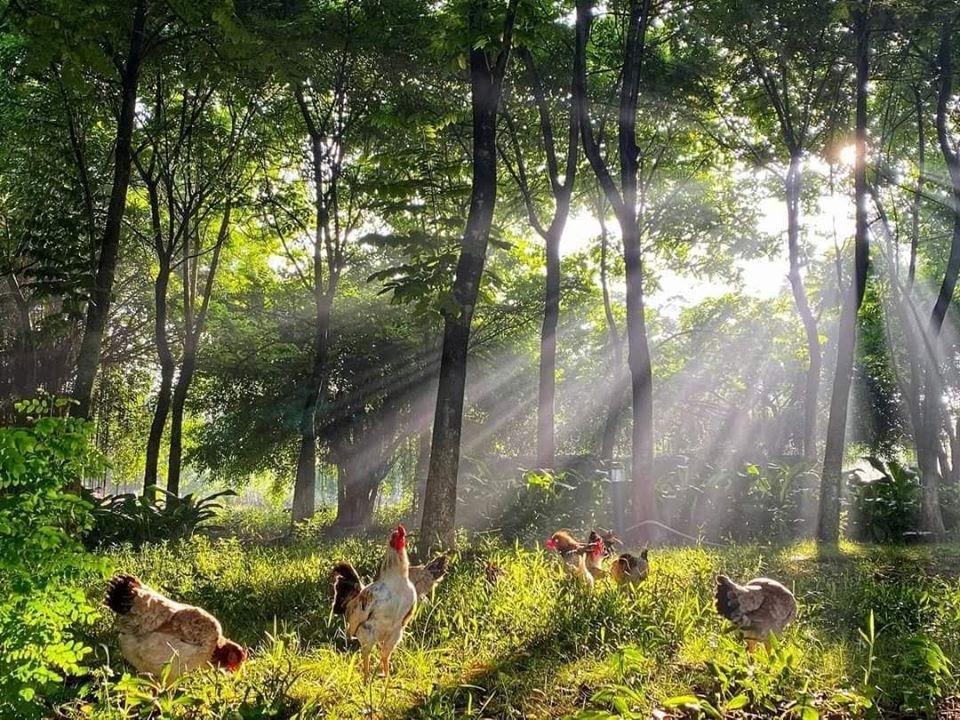 Ngắm bình minh đẹp như tranh vẽ tại khu đô thị xanh Ecopark - Ảnh 10.