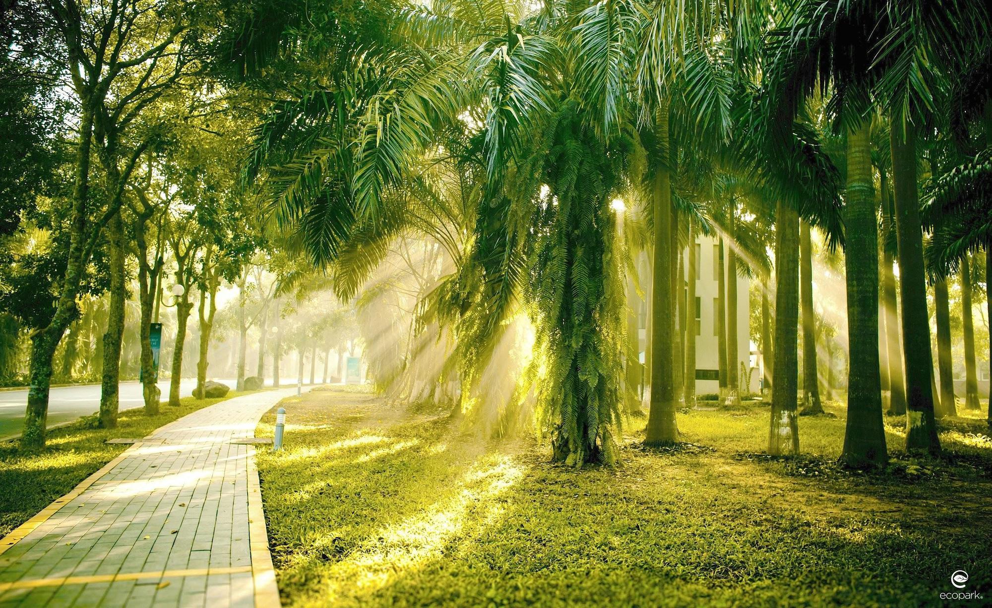 Ngắm bình minh đẹp như tranh vẽ tại khu đô thị xanh Ecopark - Ảnh 3.