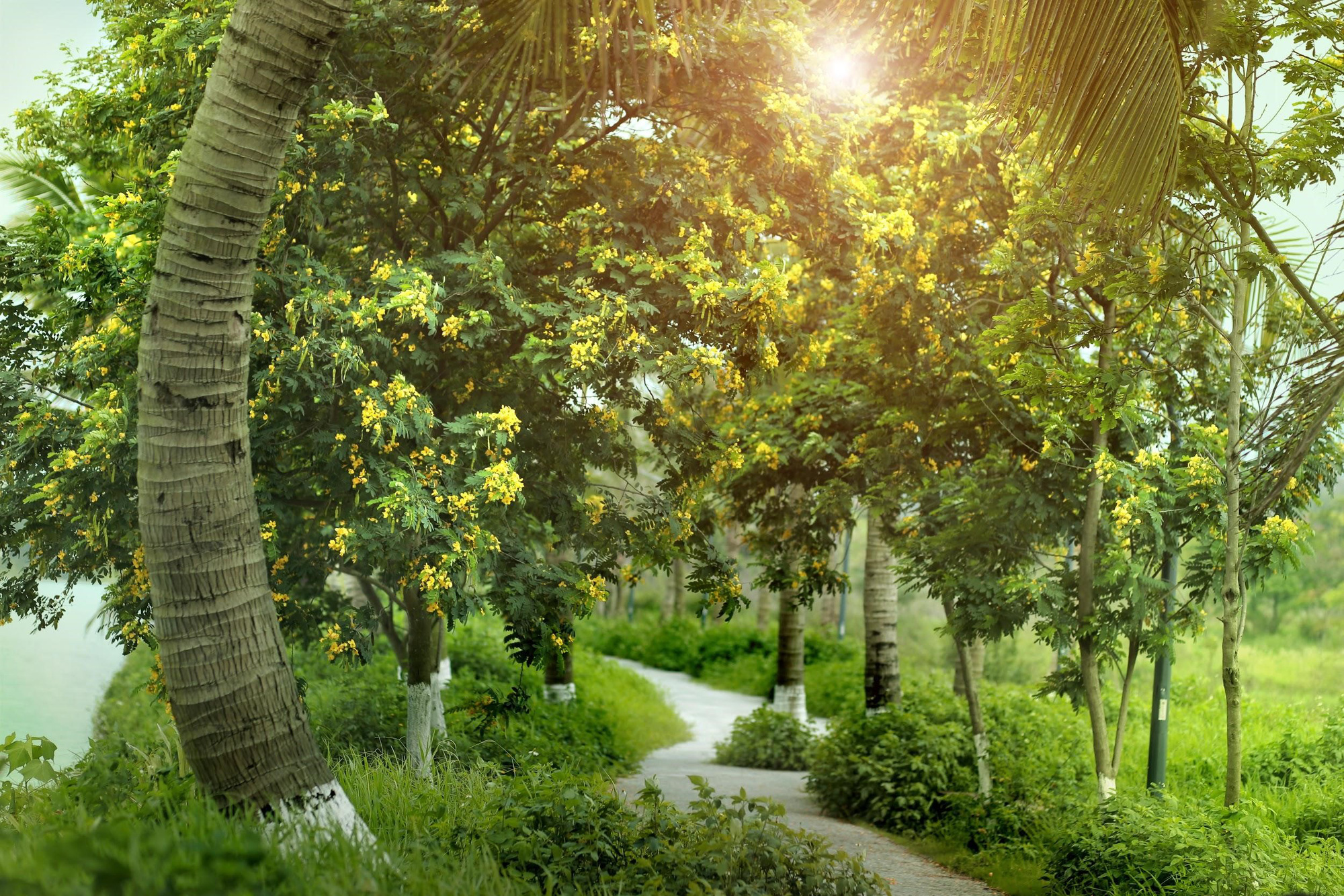 Ngắm bình minh đẹp như tranh vẽ tại khu đô thị xanh Ecopark - Ảnh 5.