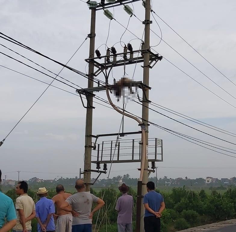 Hải Phòng: Giữa đêm mất điện, phát hiện một người chết treo gần trạm biến áp - Ảnh 1.