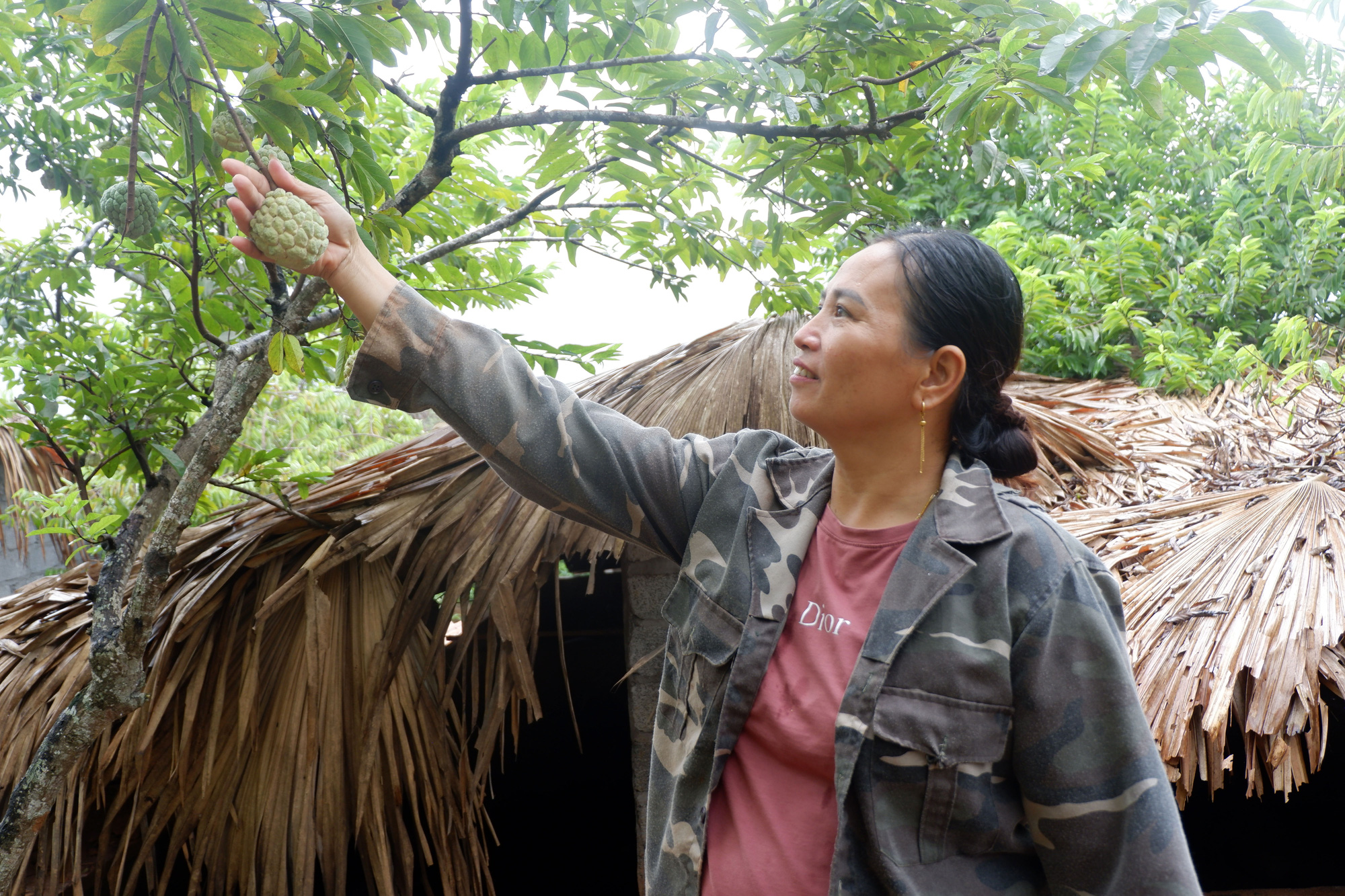Hà Giang: Trên trồng thứ na đặc sản, dưới nuôi gà chạy bộ đầy vườn, dân ở đây thu hàng trăm triệu/năm không hiếm - Ảnh 1.