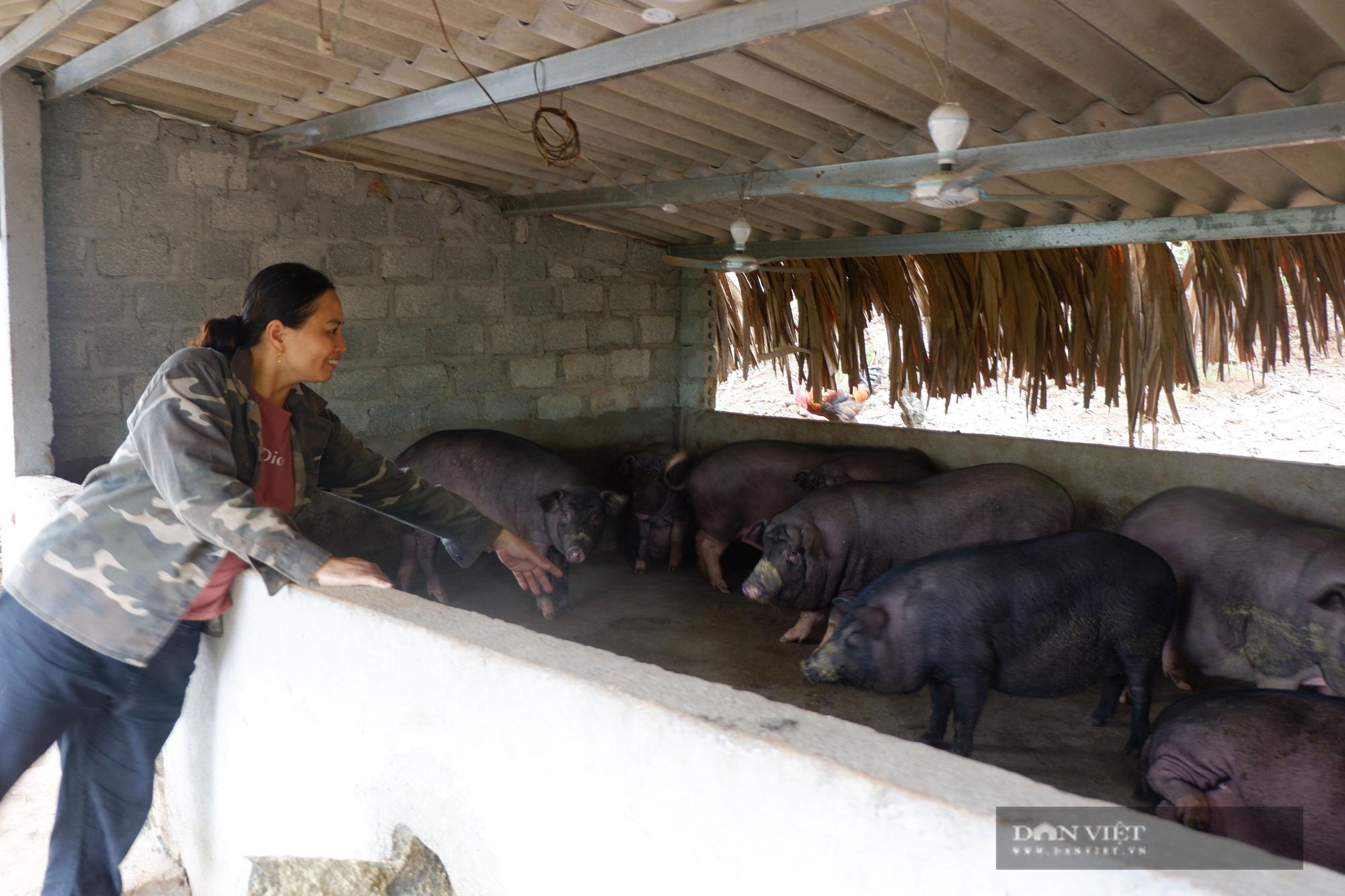 Hà Giang: Trên trồng thứ na đặc sản, dưới nuôi gà chạy bộ đầy vườn, dân ở đây thu hàng trăm triệu/năm không hiếm - Ảnh 3.
