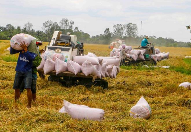 Giá gạo Việt Nam xuất khẩu cao nhất gần 9 năm - Ảnh 1.