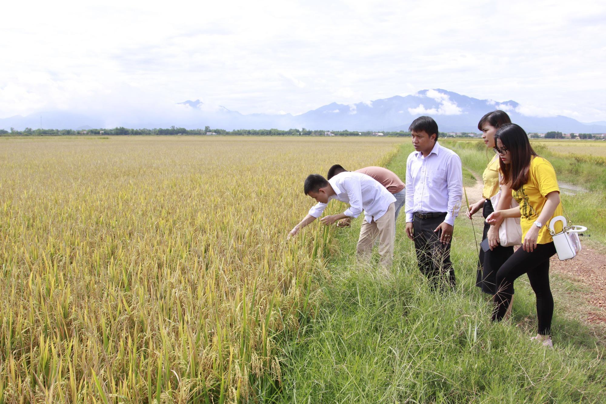 """TS Đặng Kim Sơn: Nói 90% người Việt phải dùng gạo """"bẩn"""" là vô căn cứ - Ảnh 3."""