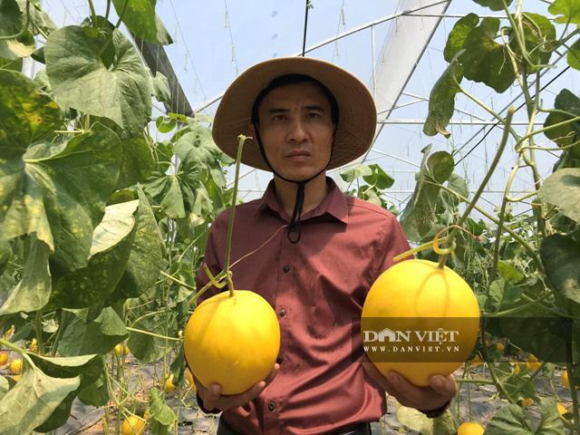 Trồng dưa lưới công nghệ Israel, nông dân Lê Văn Long thu gần 200 triệu đồng sau hơn hai tháng - Ảnh 4.
