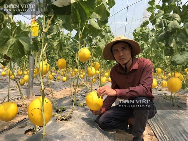 Trồng dưa lưới công nghệ Israel, nông dân Lê Văn Long thu gần 200 triệu đồng sau hơn hai tháng - Ảnh 2.