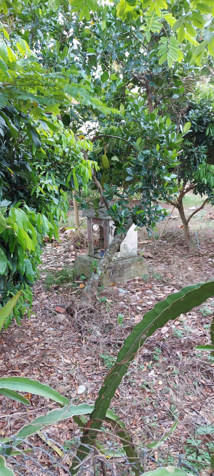 Kể chuyện làng: Miễu thờ Thầy Ba Đức  - Ảnh 1.