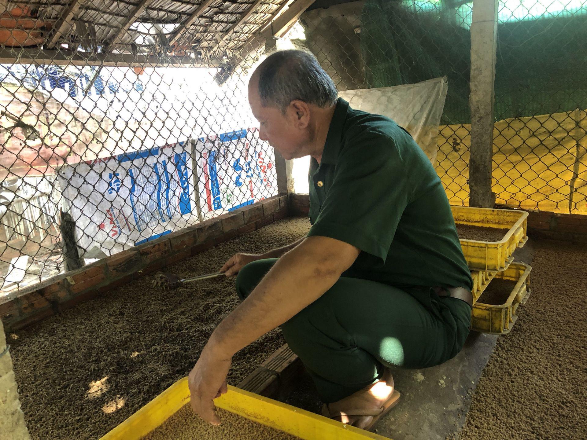 Tây Ninh: Nuôi loài ruồi này rồi lấy trứng đem bán giá 3 triệu đồng/100 gram trứng ruồi - Ảnh 2.