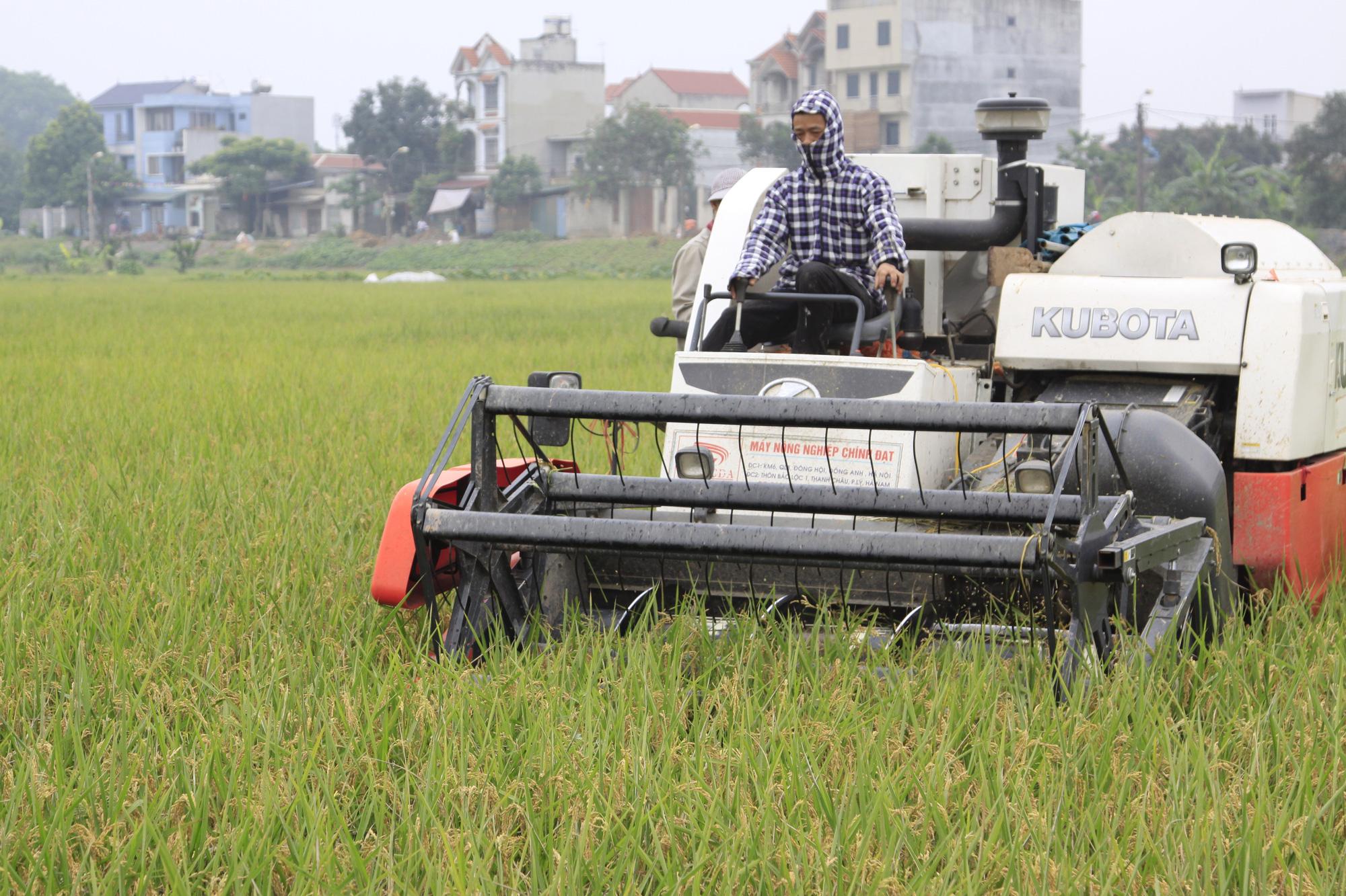 9 loại gạo thơm được đặc cách hưởng ưu đãi thuế sang EU là những giống gì? - Ảnh 2.