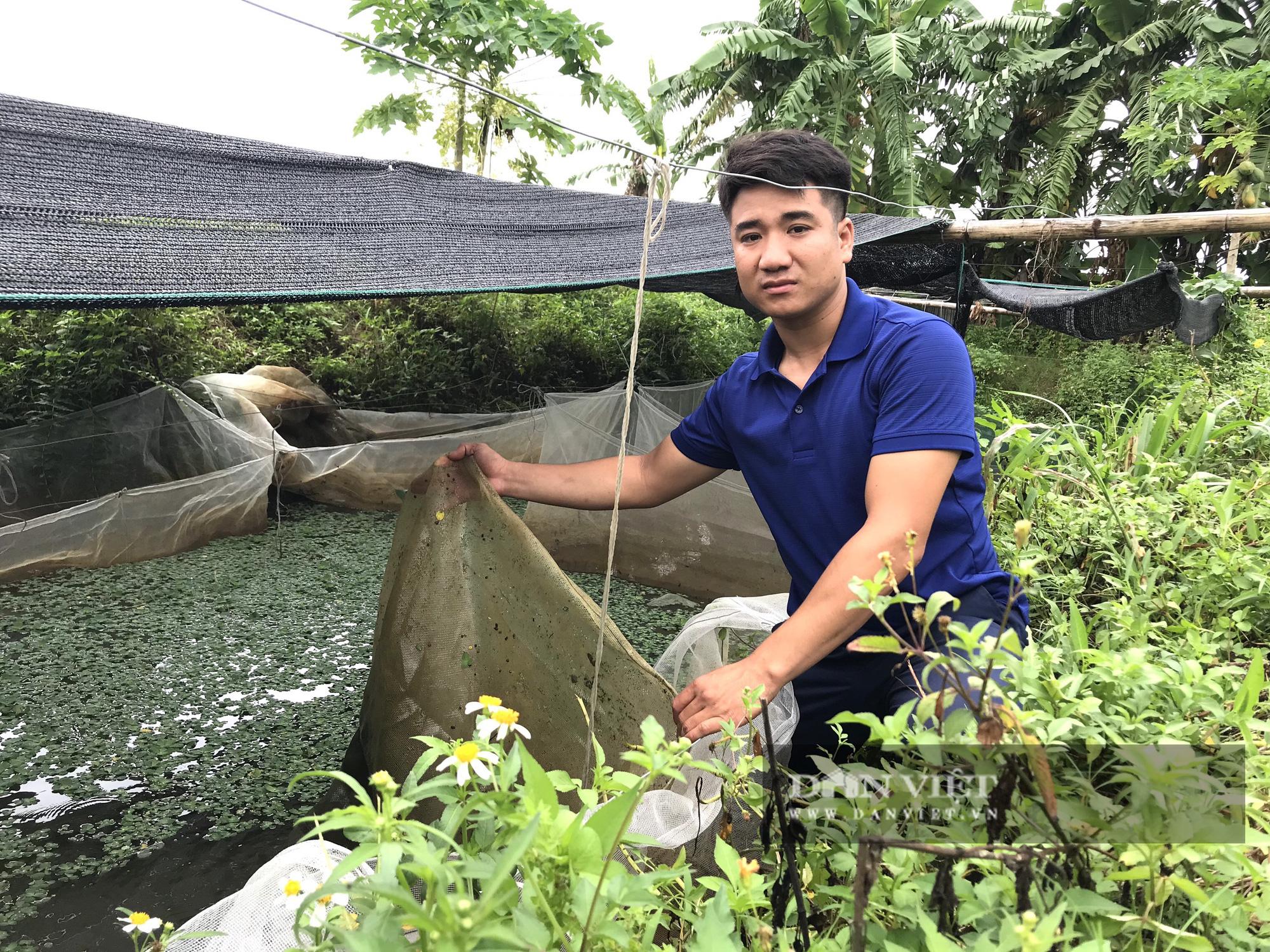 Một nông dân mất trộm gần 700.000 con ốc nhồi giống - Ảnh 3.