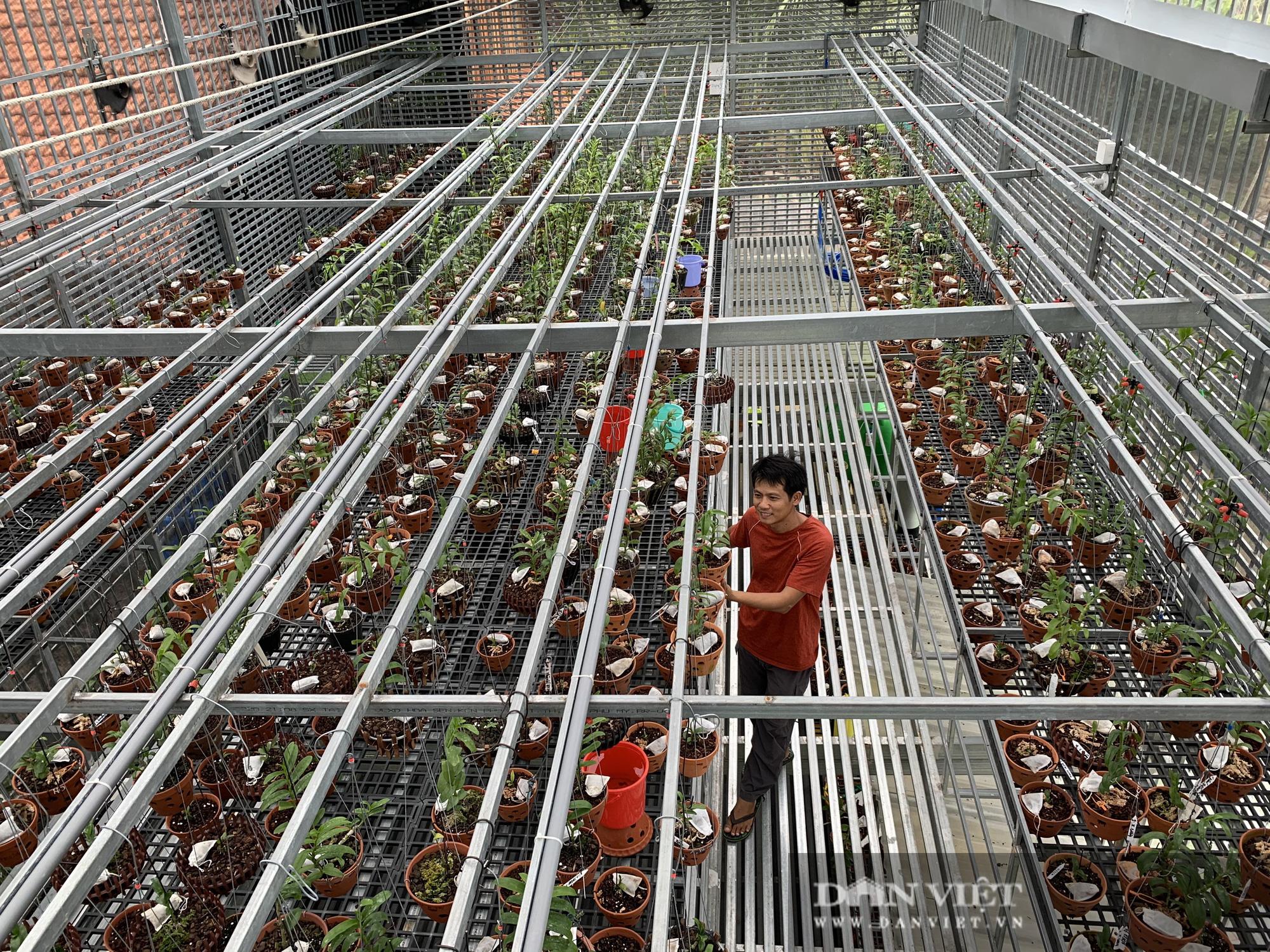 Có gì bên trong khu vườn trồng toàn lan đột biến, trị giá hơn 60 tỷ ở Cần Thơ? - Ảnh 1.