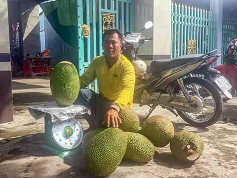 Mít Thái tăng giá vù vù, vượt đỉnh giá 2019, cứ bán 1 trái to thu hơn nửa triệu đồng - Ảnh 1.
