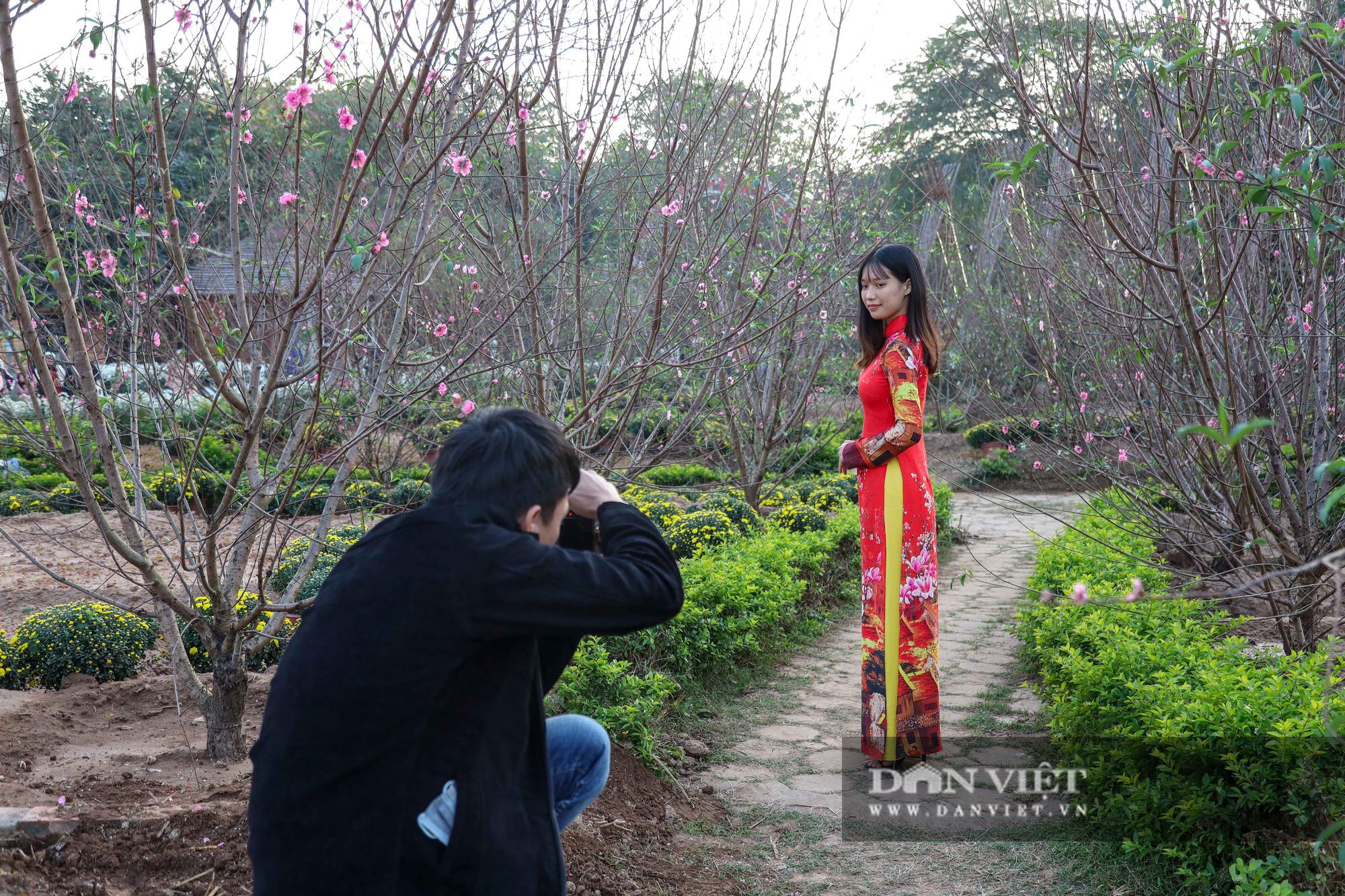 Người Hà Nội nô nức chụp ảnh check-in hoa đào từ Tết Dương lịch - Ảnh 2.