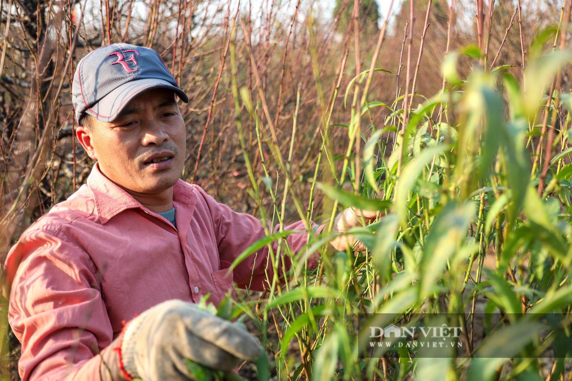 Người Hà Nội nô nức chụp ảnh check-in hoa đào từ Tết Dương lịch - Ảnh 7.