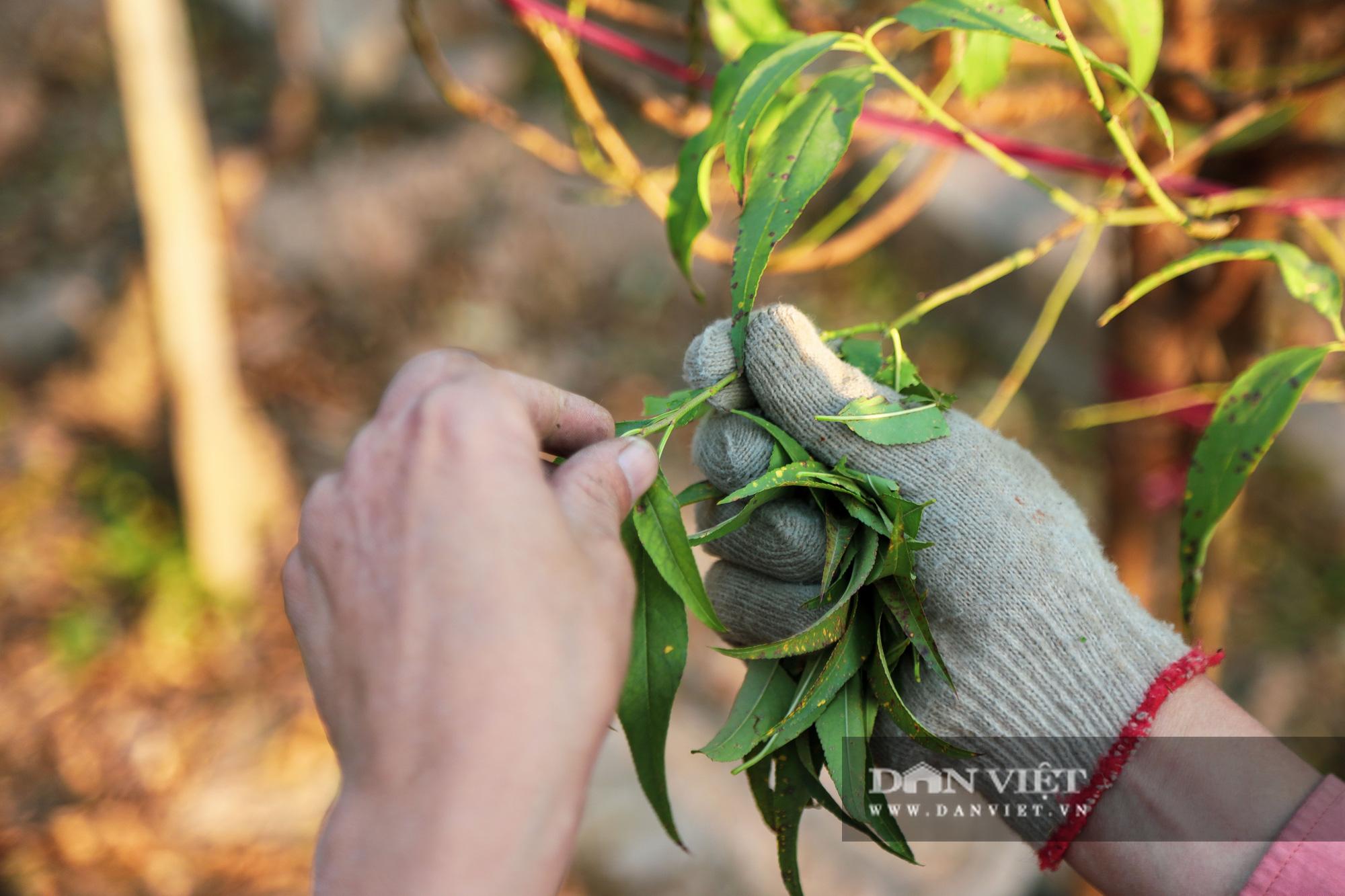 Người Hà Nội nô nức chụp ảnh check-in hoa đào từ Tết Dương lịch - Ảnh 8.
