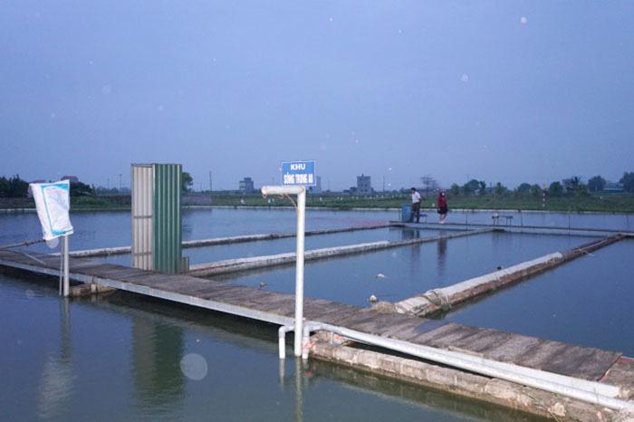 """Nuôi cá ngon theo công nghệ """"sông trong ao"""", một ông nông dân tỉnh Hưng Yên mỗi năm bán 250 tấn cá, thu tiền tỷ - Ảnh 2."""