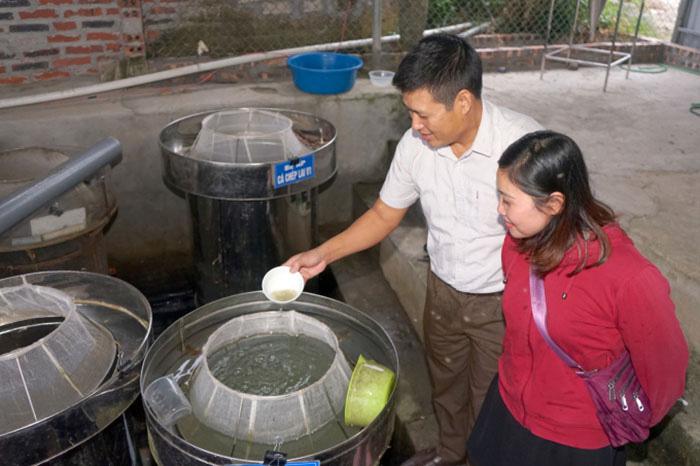 """Nuôi cá ngon theo công nghệ """"sông trong ao"""", một ông nông dân tỉnh Hưng Yên mỗi năm bán 250 tấn cá, thu tiền tỷ - Ảnh 3."""