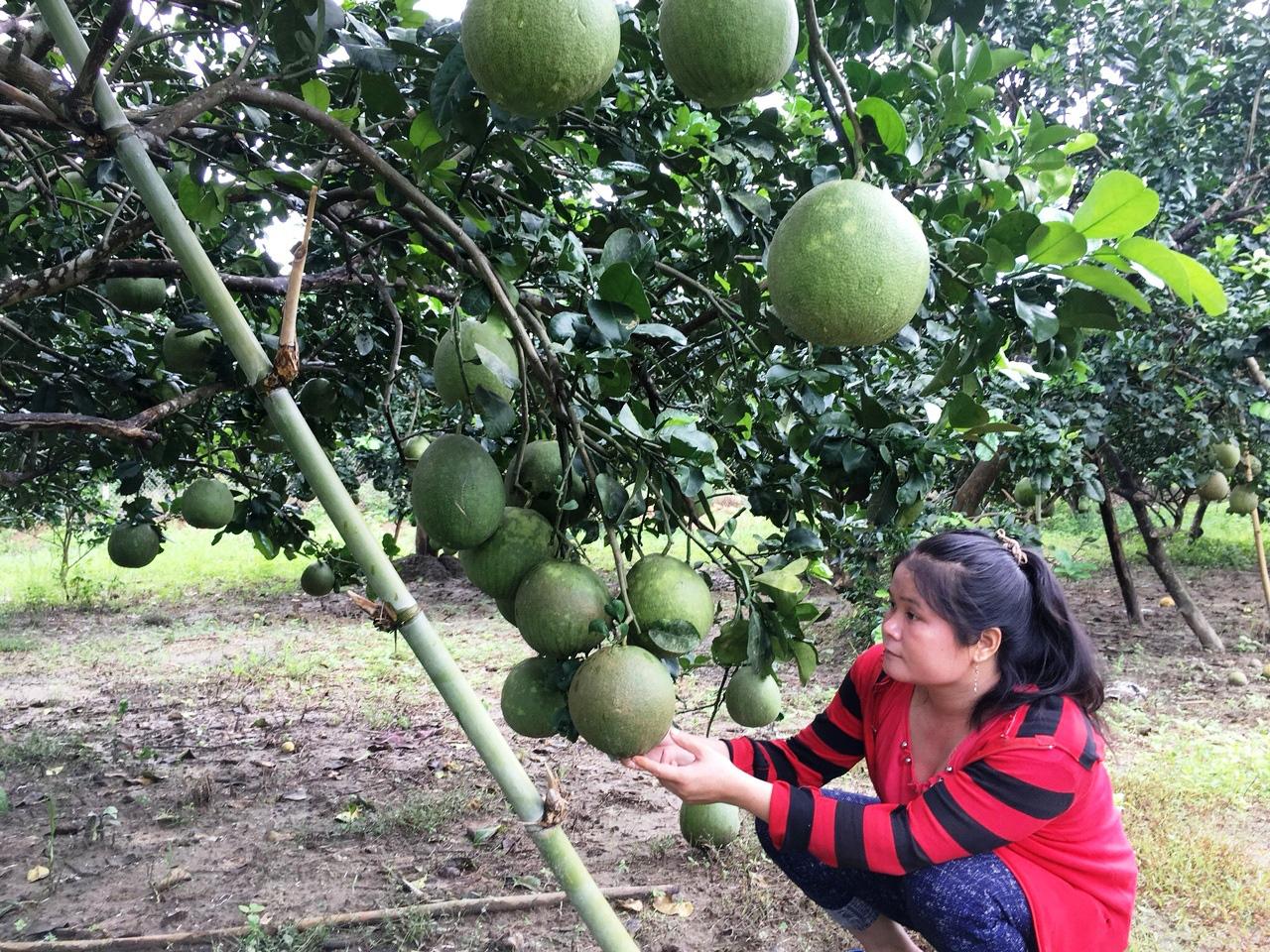 Hội Nông dân Khánh Hòa: Nhiều mô hình giúp hội viên, nông dân phát triển kinh tế - Ảnh 5.
