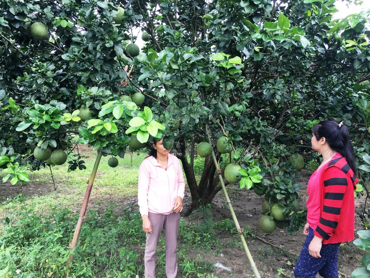 Hội Nông dân Khánh Hòa: Nhiều mô hình giúp hội viên, nông dân phát triển kinh tế - Ảnh 1.