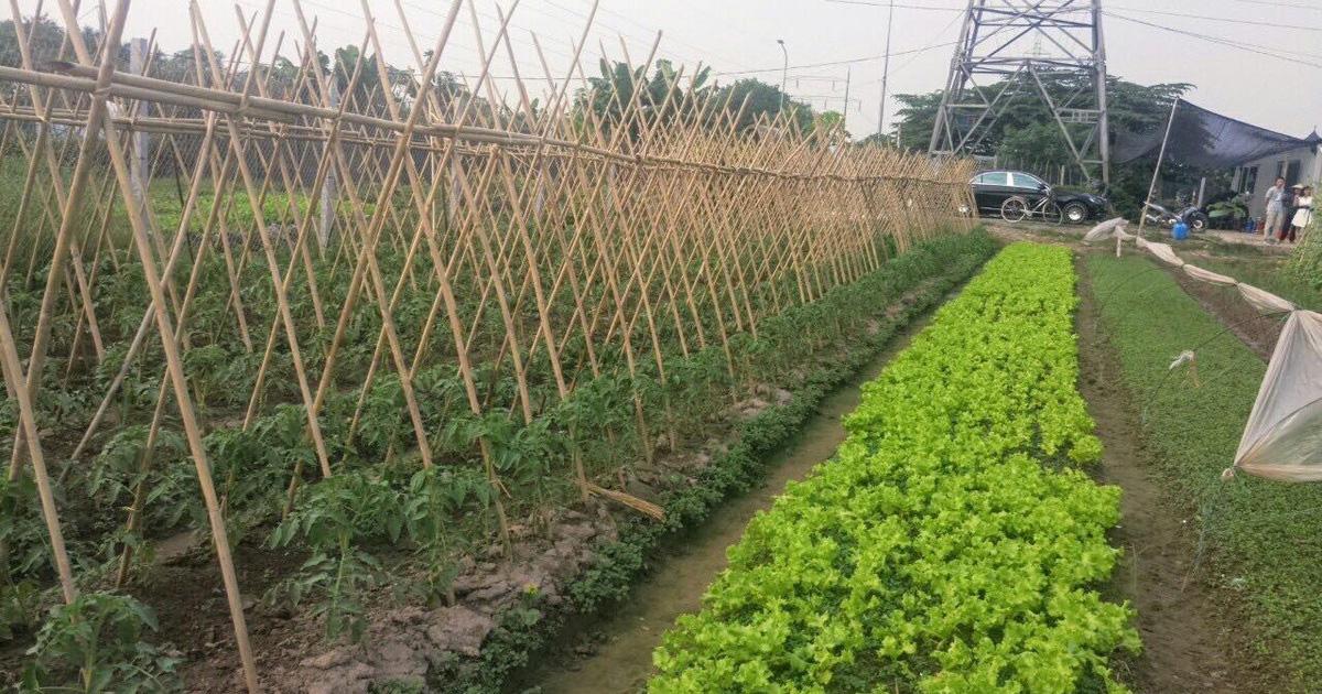 Điều kiện, thủ tục tách thửa đất nông nghiệp năm 2021