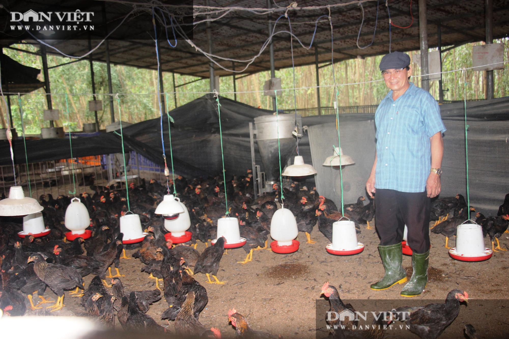 Giá gà đang tăng nhẹ, người nuôi ở Bình Định chờ giá bứt phá vào cận Tết Nguyên đán Tân Sửu 2021 - Ảnh 2.