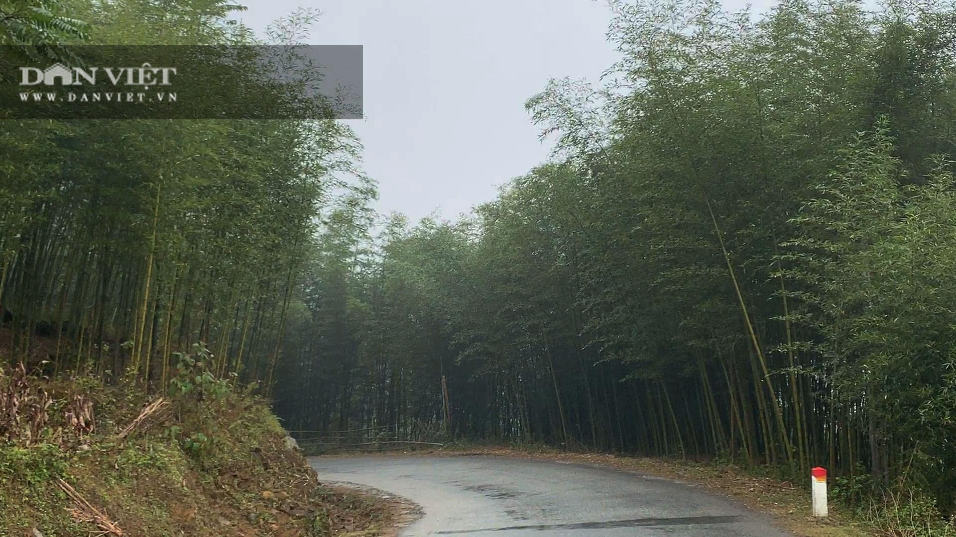 Cao Bằng: Trồng loài cây có đốt, một lần trồng mọc lan cả rừng, nông dân ở đây rủng rỉnh tiền - Ảnh 2.