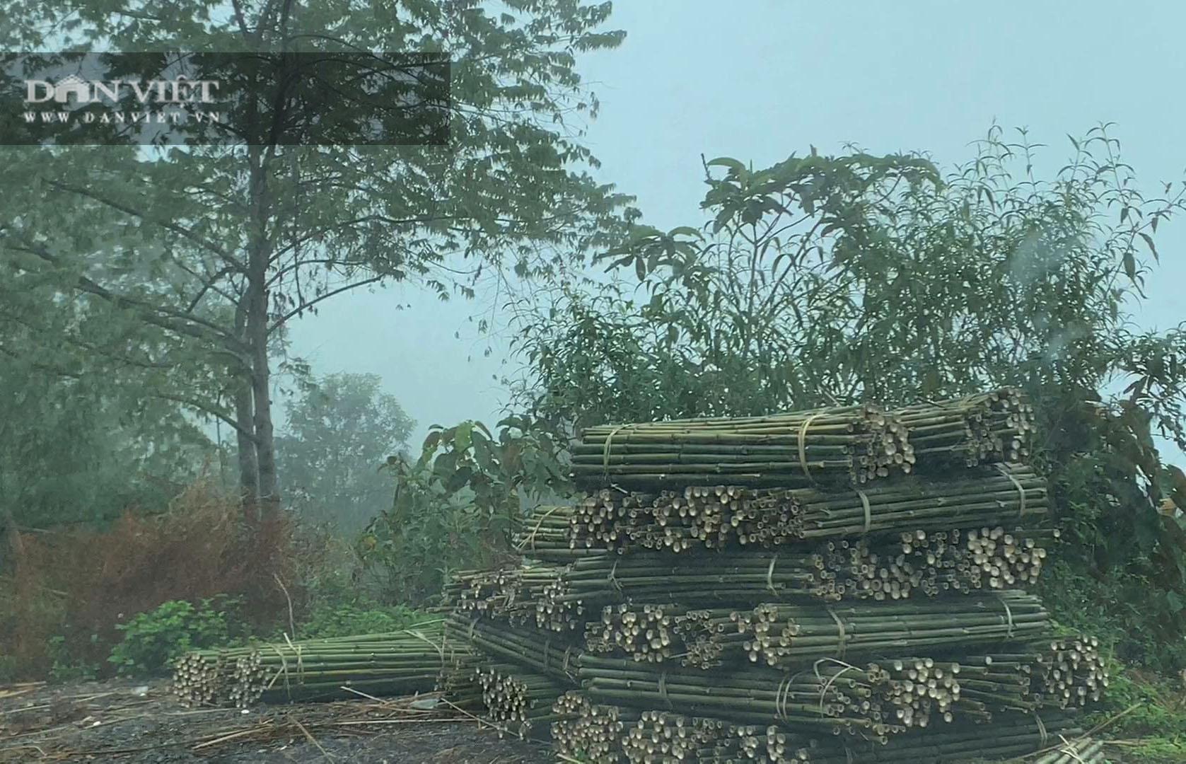 Cao Bằng: Trồng loài cây có đốt, một lần trồng mọc lan cả rừng, nông dân ở đây rủng rỉnh tiền - Ảnh 3.
