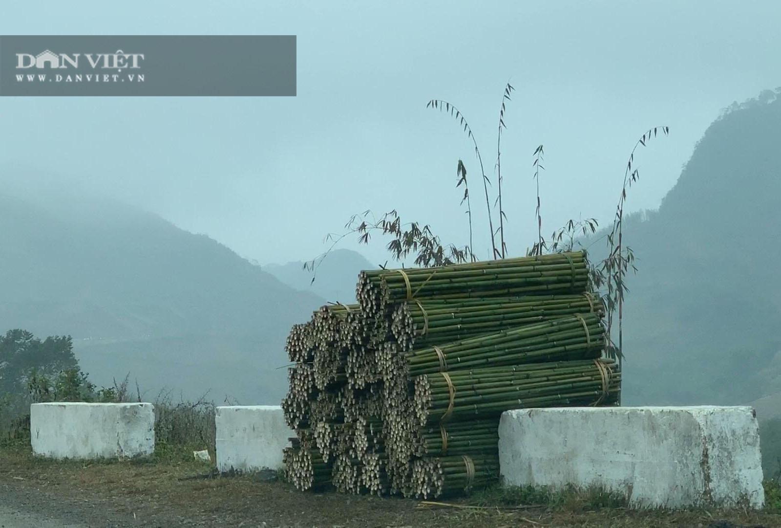 Cao Bằng: Trồng loài cây có đốt, một lần trồng mọc lan cả rừng, nông dân ở đây rủng rỉnh tiền - Ảnh 4.