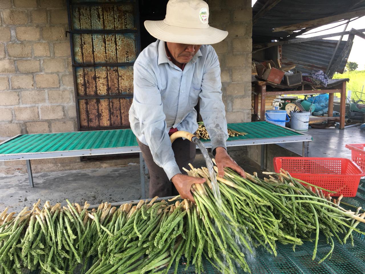 Triển khai thí điểm các mô hình nông nghiệp - Ảnh 2.