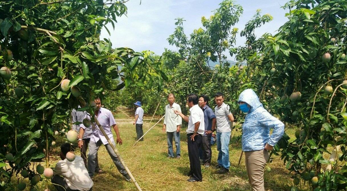 Hội Nông dân Khánh Hòa: Nhiều mô hình giúp hội viên, nông dân phát triển kinh tế - Ảnh 2.