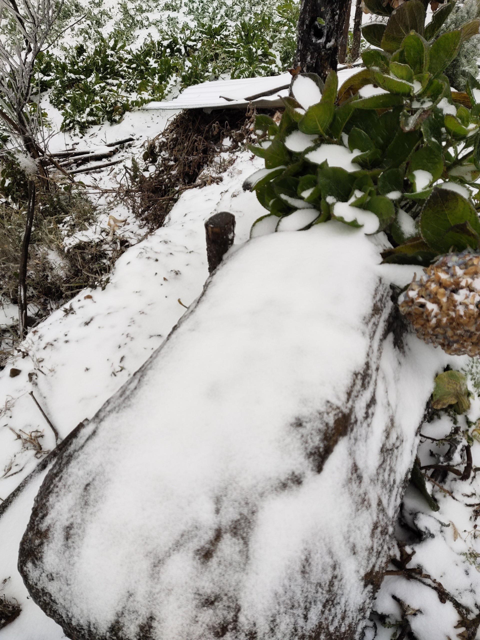 Tuyết rơi dày đặc ở Y Tý, cảnh vật phủ màu trắng xóa như trời Âu - Ảnh 4.