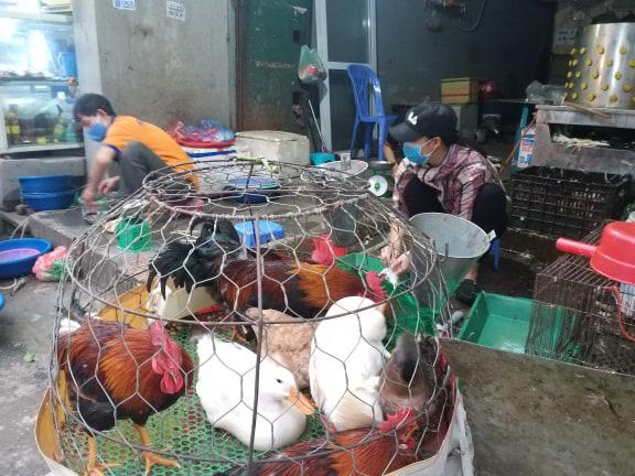 """Giá gia cầm hôm nay: Giá vịt miền Bắc vẫn thê thảm, người nuôi gà như """"ngồi trên đống lửa"""" - Ảnh 3."""
