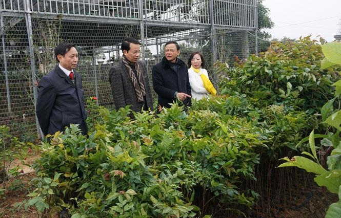 Thứ trưởng Bộ NN&PTNT Hà Công Tuấn: Thái Nguyên cần quan tâm phát triển rừng trồng gỗ lớn - Ảnh 1.