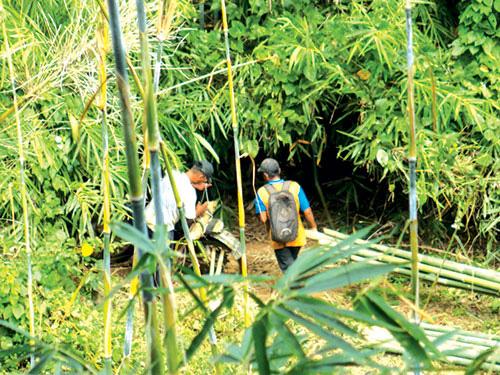 Đáng ngại, ầm ầm chặt cây lồ ô trái phép trong rừng tỉnh Bình Thuận, tiếng bốp vang lên cây đổ xuống - Ảnh 1.