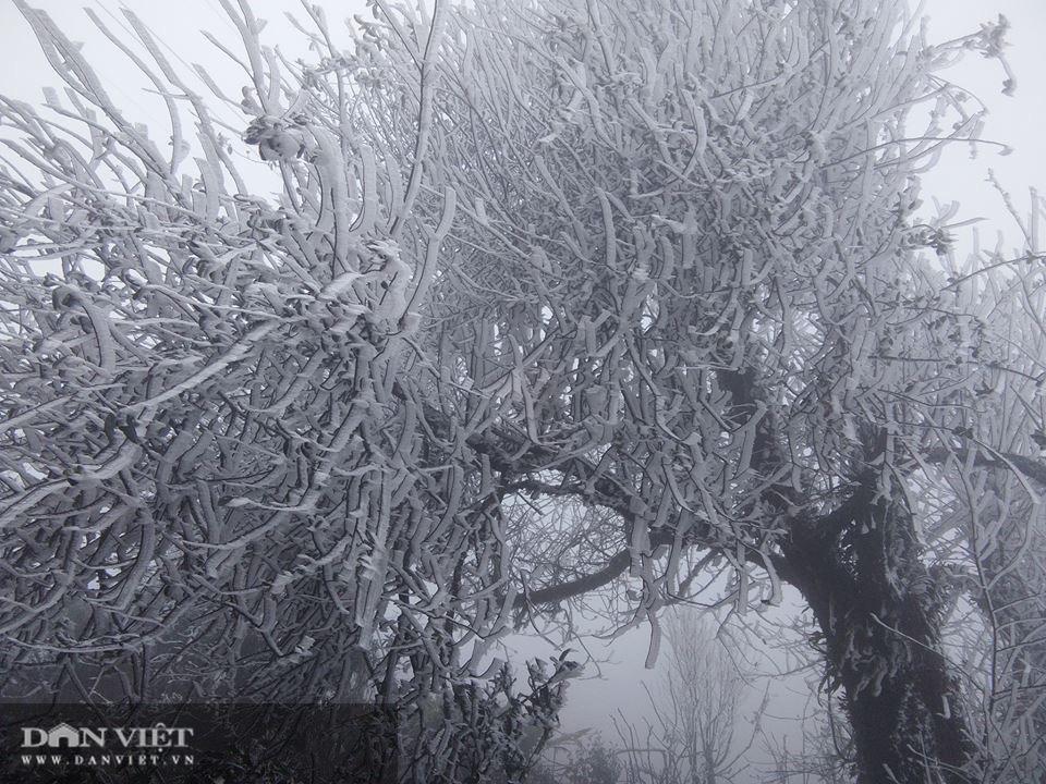 Ảnh: Băng tuyết xuất hiện trắng xóa trên đỉnh núi Tà Xùa - Ảnh 11.