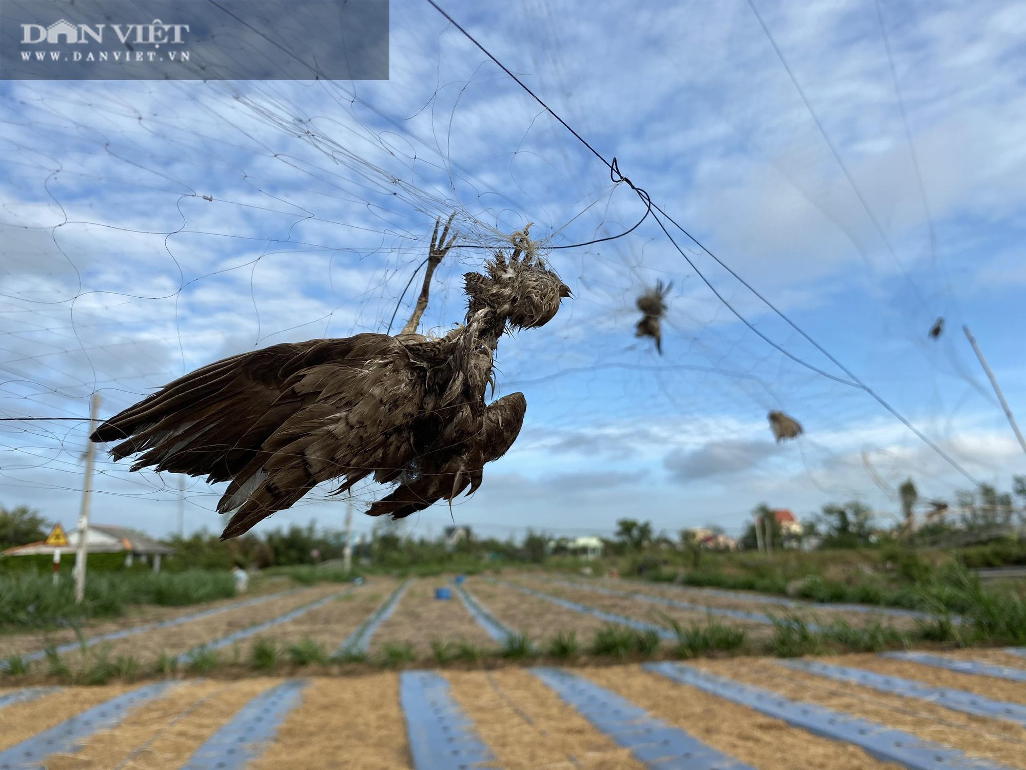 """CụcBảo tồn Thiên nhiên vàĐa dạng Sinh học (Bộ TNMT): Thủ phạm chính là các nhà hàng """"Đặc sản Chim trời""""! - Ảnh 8."""