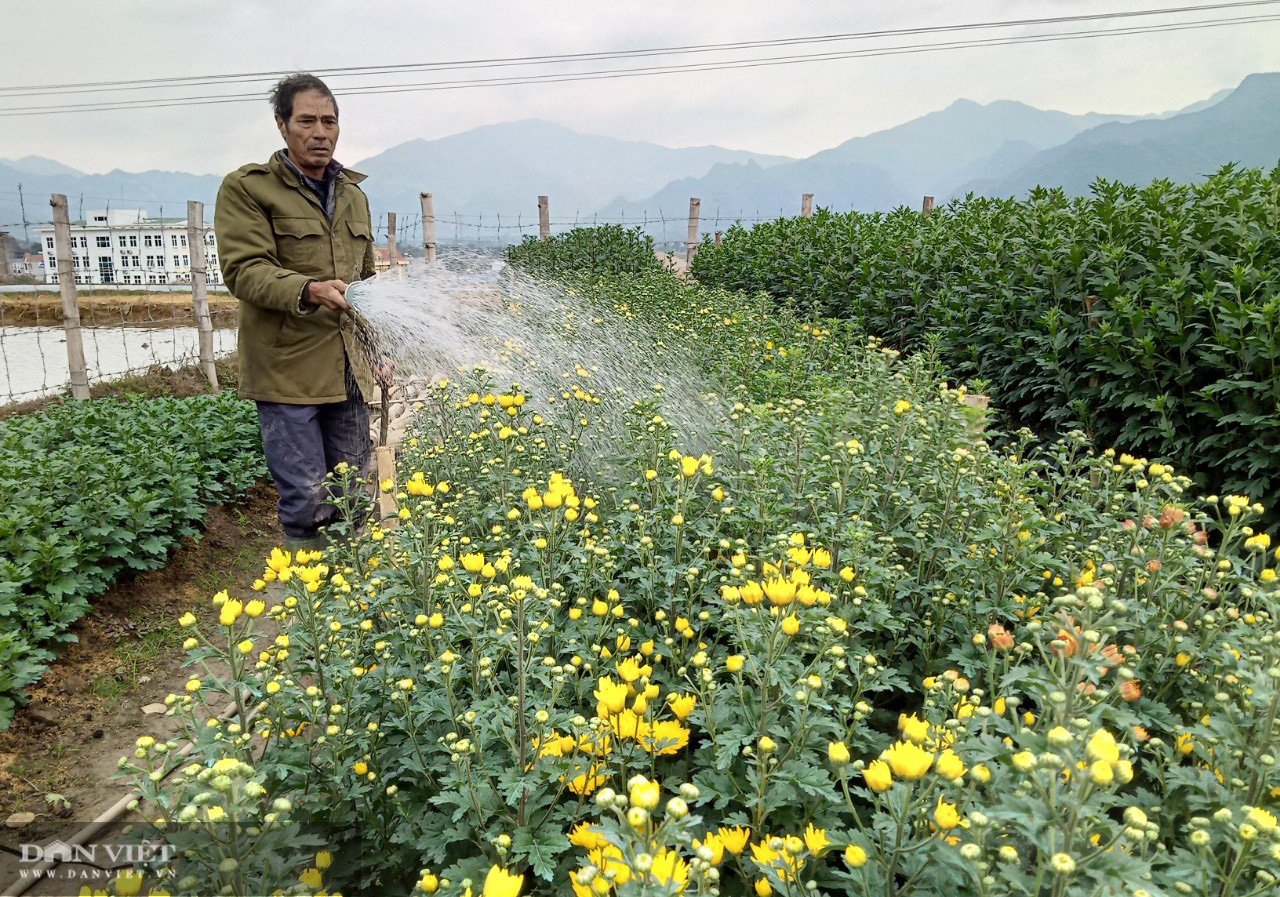 Lão nông bỏ túi trăm triệu từ mô hình trồng hoa xuân - Ảnh 1.