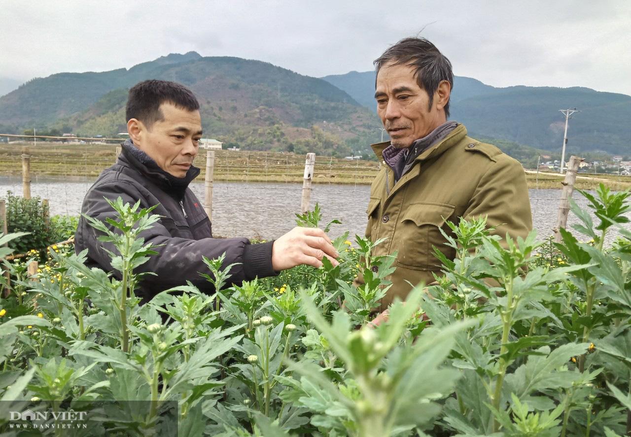 Lão nông bỏ túi trăm triệu từ mô hình trồng hoa xuân - Ảnh 2.