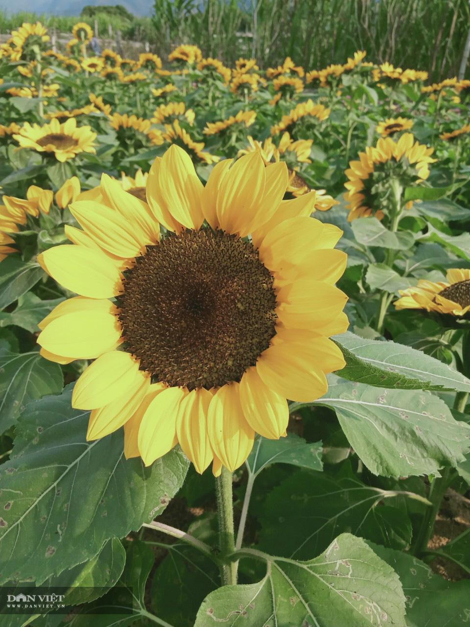 Lão nông bỏ túi trăm triệu từ mô hình trồng hoa xuân - Ảnh 3.