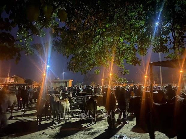 Nghệ An: Rét tê tái, 4 giờ sáng đi chợ trâu bò đông nghìn nghịt, loáng cái, 1 thương lái đã gom được 40 con - Ảnh 1.