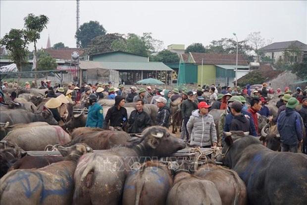 Nghệ An: Rét tê tái, 4 giờ sáng đi chợ trâu bò đông nghìn nghịt, loáng cái, 1 thương lái đã gom được 40 con - Ảnh 2.