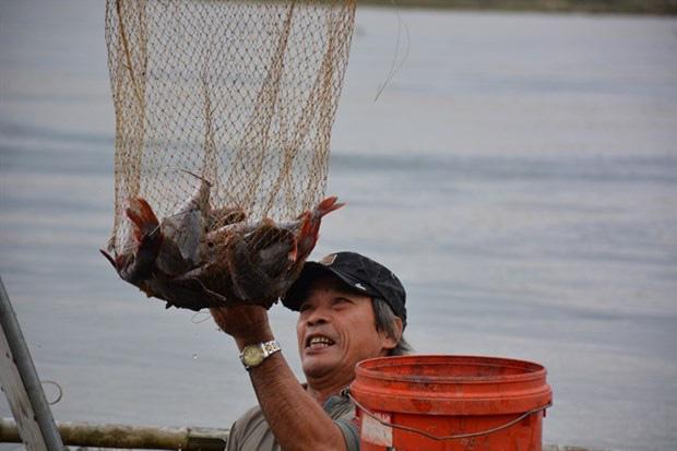 Quảng Ngãi: Nuôi loài cá mới lạ body săn chắc vây đỏ như son ở dưới sông, nông dân mong đổi đời - Ảnh 1.