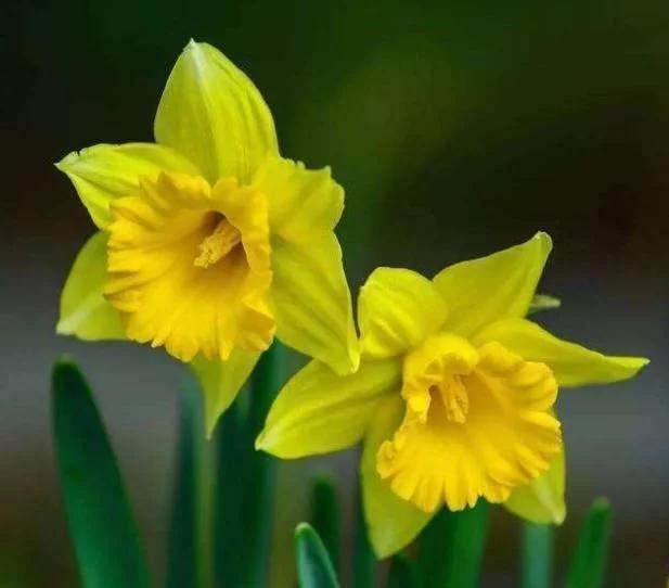 Sinh vào 6 ngày Âm lịch này đã có số phú quý, cuộc đời suôn sẻ, không gặp bất cứ gập ghềnh nào - Ảnh 1.