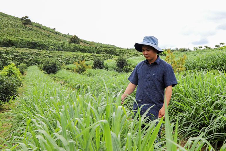 Bỏ lương 40 triệu, trai Lâm Đồng về quê trồng đồng cỏ xanh, nuôi thỏ trắng có thu được tiền tỷ không? - Ảnh 1.