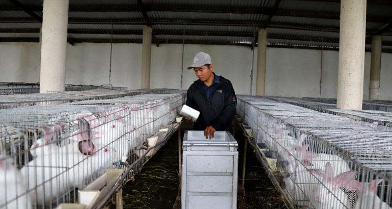 Bỏ lương 40 triệu, trai Lâm Đồng về quê trồng đồng cỏ xanh, nuôi thỏ trắng có thu được tiền tỷ không? - Ảnh 3.