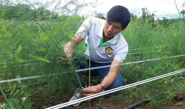 Cất bằng huấn luyện viên thể dục, 9X tỉnh Đắk Lắk về quê làm giám đốc trồng vô vàn rau lạ - Ảnh 1.
