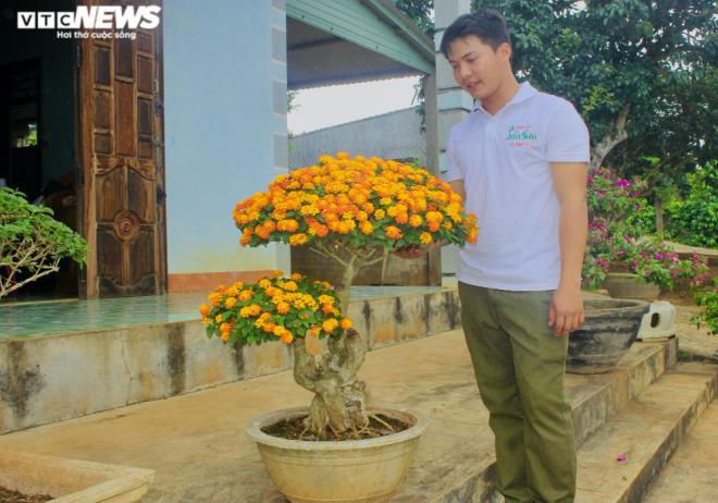 Gia Lai: Đem loài hoa dại ven đường về hóa trang thành cây cảnh chưng Tết, nông dân đút túi tiền triệu - Ảnh 1.
