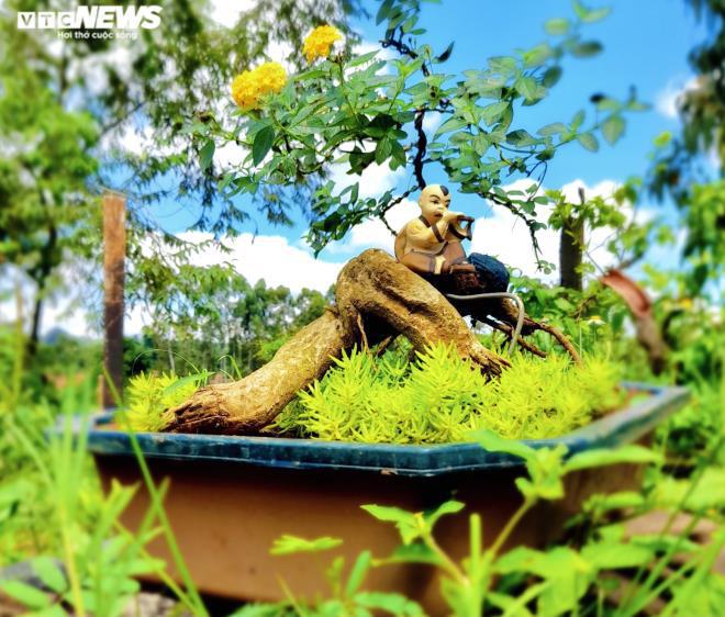 Gia Lai: Đem loài hoa dại ven đường về hóa trang thành cây cảnh chưng Tết, nông dân đút túi tiền triệu - Ảnh 5.