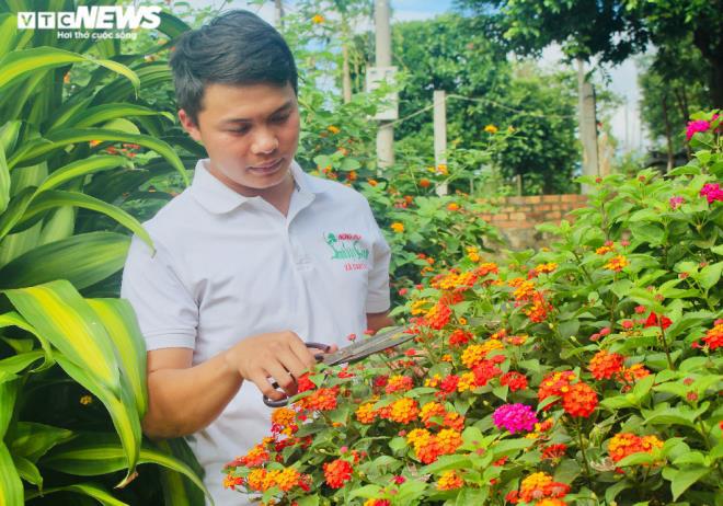Gia Lai: Đem loài hoa dại ven đường về hóa trang thành cây cảnh chưng Tết, nông dân đút túi tiền triệu - Ảnh 4.
