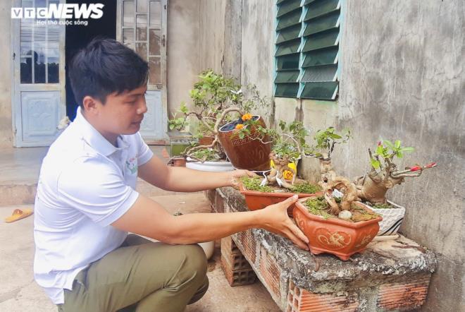 Gia Lai: Đem loài hoa dại ven đường về hóa trang thành cây cảnh chưng Tết, nông dân đút túi tiền triệu - Ảnh 9.